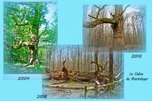 chêne de montaloyer (2)
